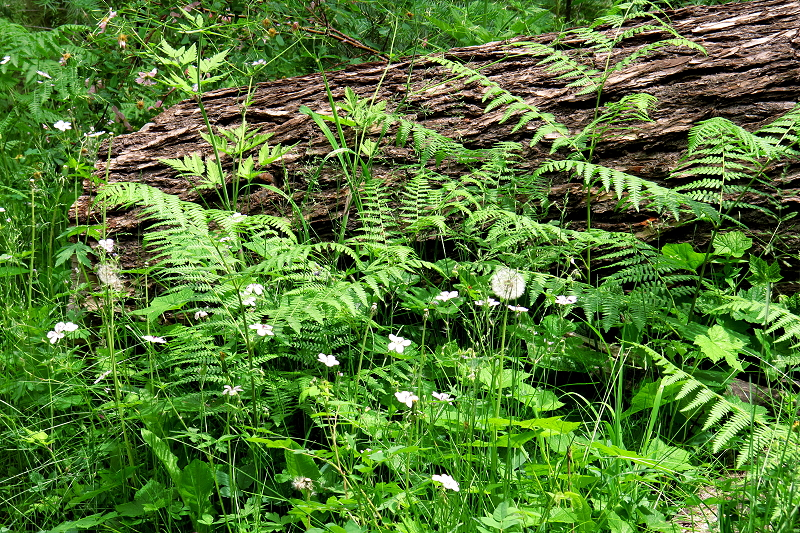 Ferns and Flowers