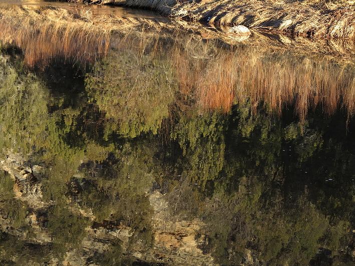 Pecos River Reflections