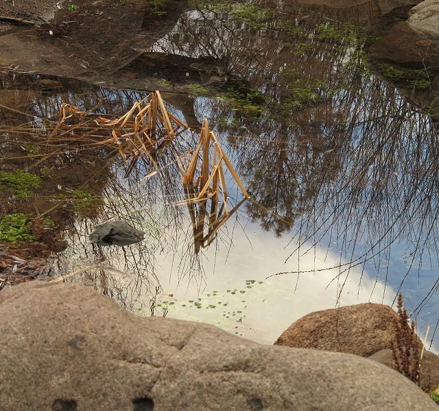 The Creek Still Flows