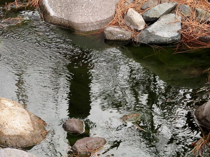 Gently Flowing Creek
