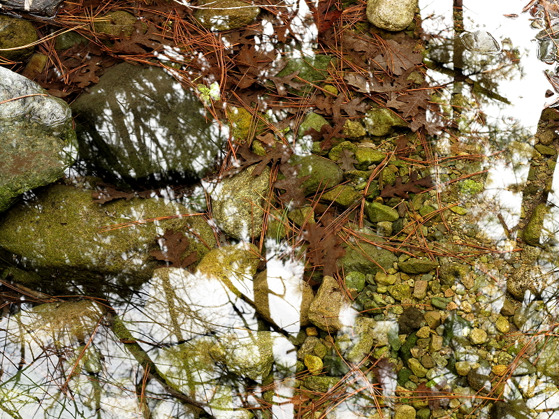 Reflections on the Creek