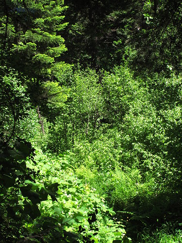 The Trail Along Rock Creek