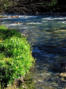 Wilson Creek 2