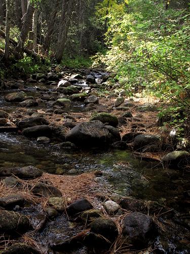 Bass Creek 1_G12 016