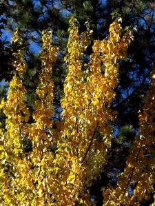 AutumnBass_G1x 386