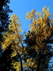 AutumnBass_G1x 390