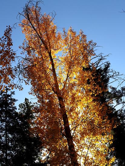 AutumnBass_G1x 396