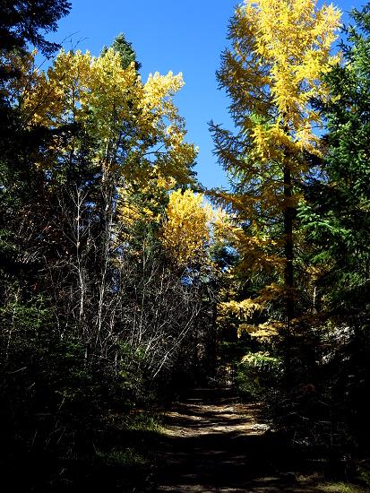 AutumnBass_G1x 408