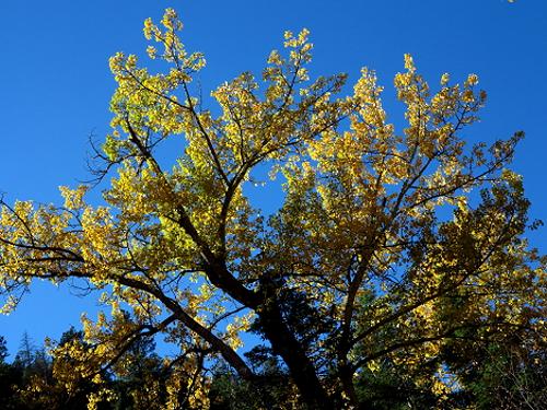 AutumnBass_G1x 412