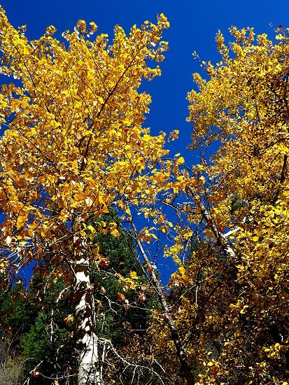 AutumnBass_G1x 414