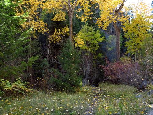 AutumnBass_G1x 417