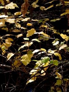 AutumnBass_G1x 425