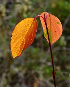 AutumnBass_G1x 436