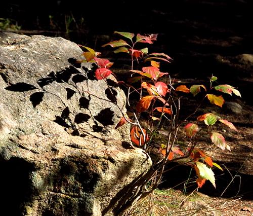 AutumnBass_G1x 437