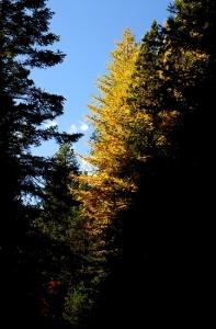 AutumnBass_G1x 452