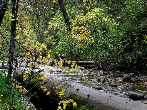 Bass Creek 1_G12 109