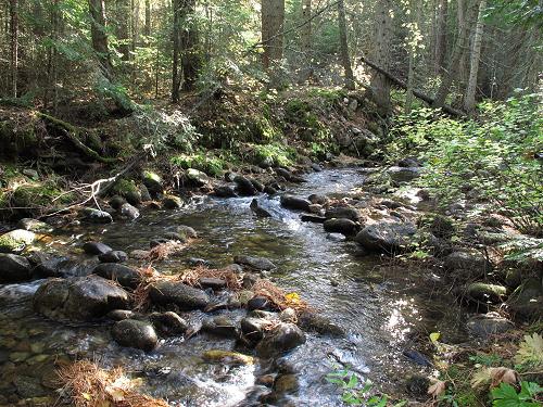 Bass Creek 1_G12 135