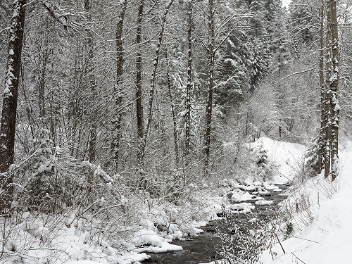 Placer Creek Snow 045
