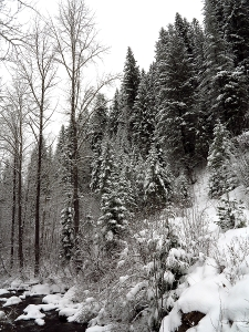 Placer Creek Snow 051
