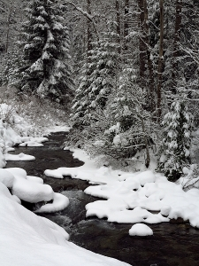 Placer Creek Snow 056