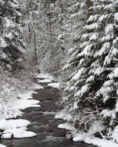 Placer Creek Snow 058