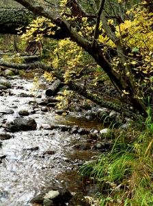 Bass Creek - 3_ G1x 185